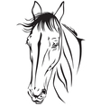 horse fase vector image vector image