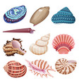 seashells set vector image