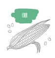 hand drawn corn isolated on white vector image
