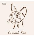 Cornish Rex vector image