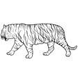 Sketch beautiful tiger on a white background vector image vector image