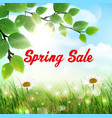 natural background with word spring sale vector image