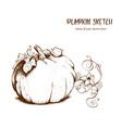 pumpkin drawing set vector image vector image