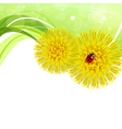 Spring floral background with coltsfoot vector image