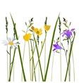 flowers in meadow vector image