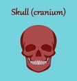 human organ icon in flat style skull vector image