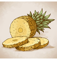 engraving pineapple slices in retro style vector image