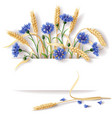 cornflower and ears banner vector image