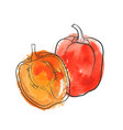 drawing sweet pepper vector image
