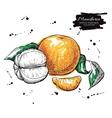 hand drawn mandarin Artistic vector image