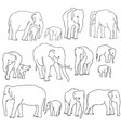 set of elephants vector image