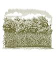 Woodcut Corn Plants vector image