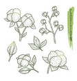 sketch of cotton plant elements with branches vector image