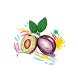 plums with colorful splashes vector image