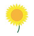 cute flower sunflower decoration nature vector image