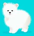 spitz dog white vector image