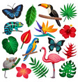 tropical exotic icon set vector image