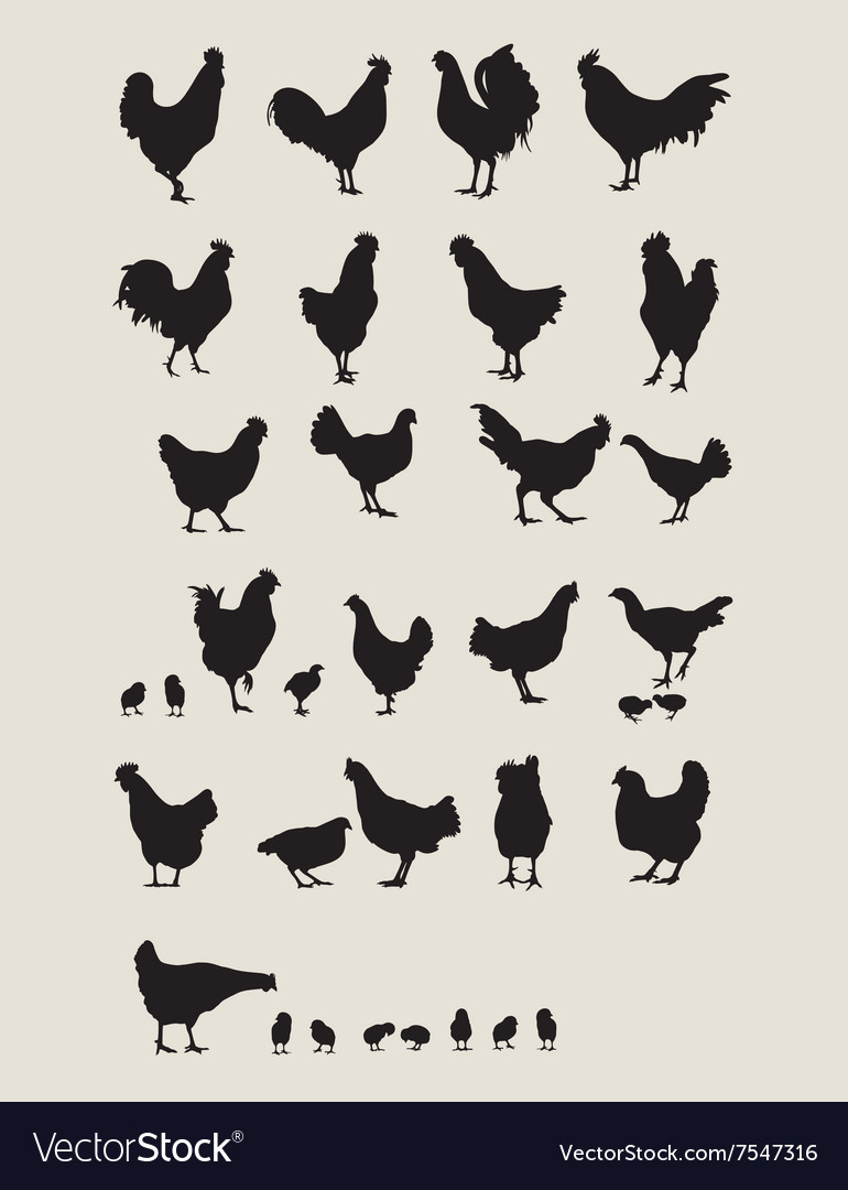 Rooster and chicken vector
