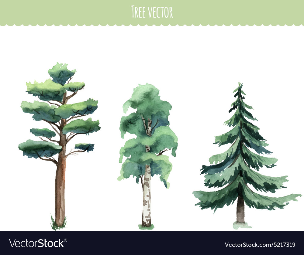 Set of watercolor trees birch pine firtree vector