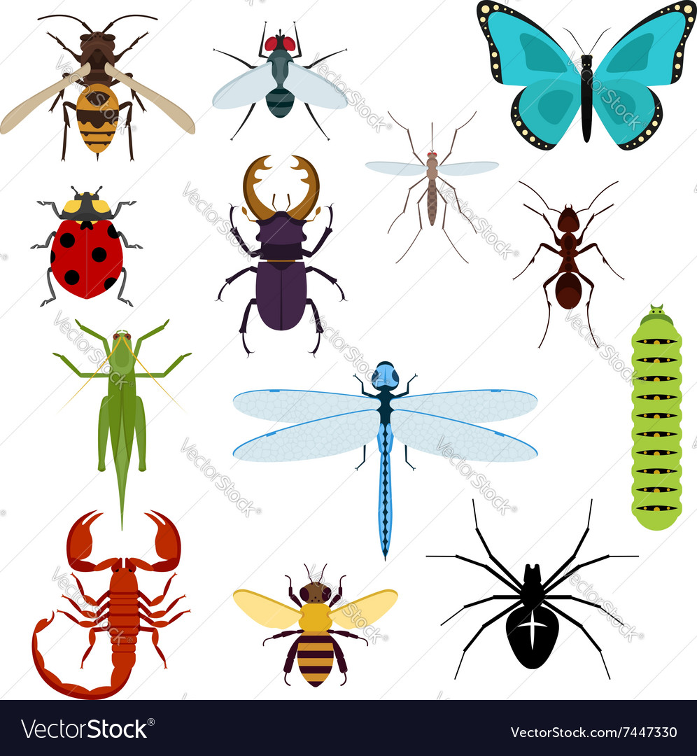 Cartoon isolated colorful insects set vector