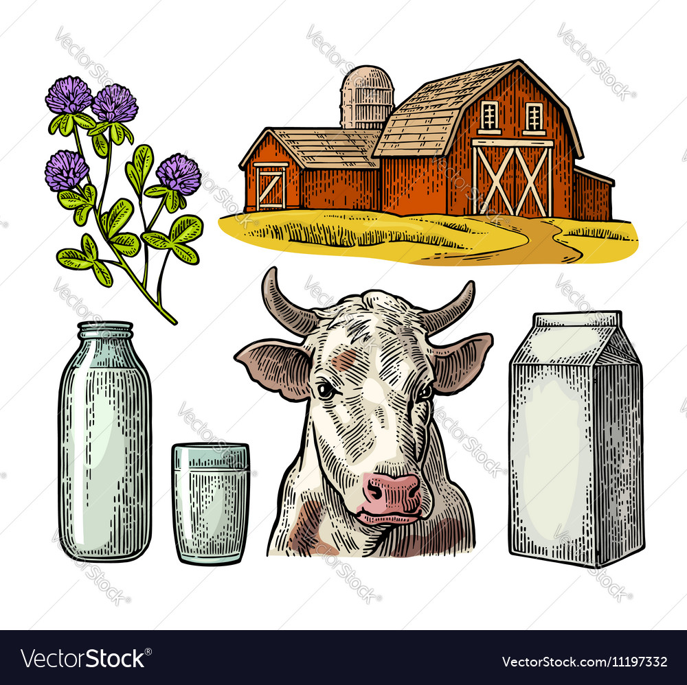 Set milk farm cow head clover box carton vector