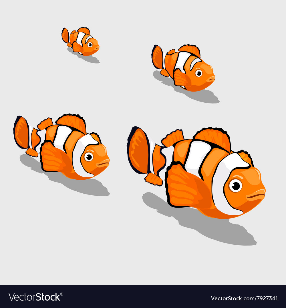 Clown fish small and close up isolated vector