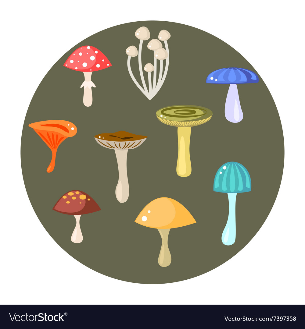 Different types of mushrooms set vector