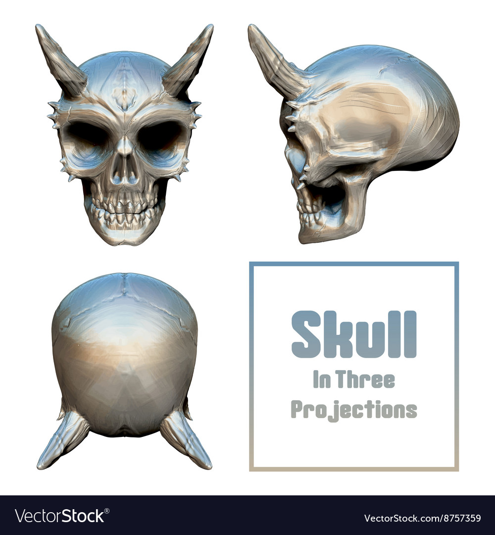 Skull in three projections vector
