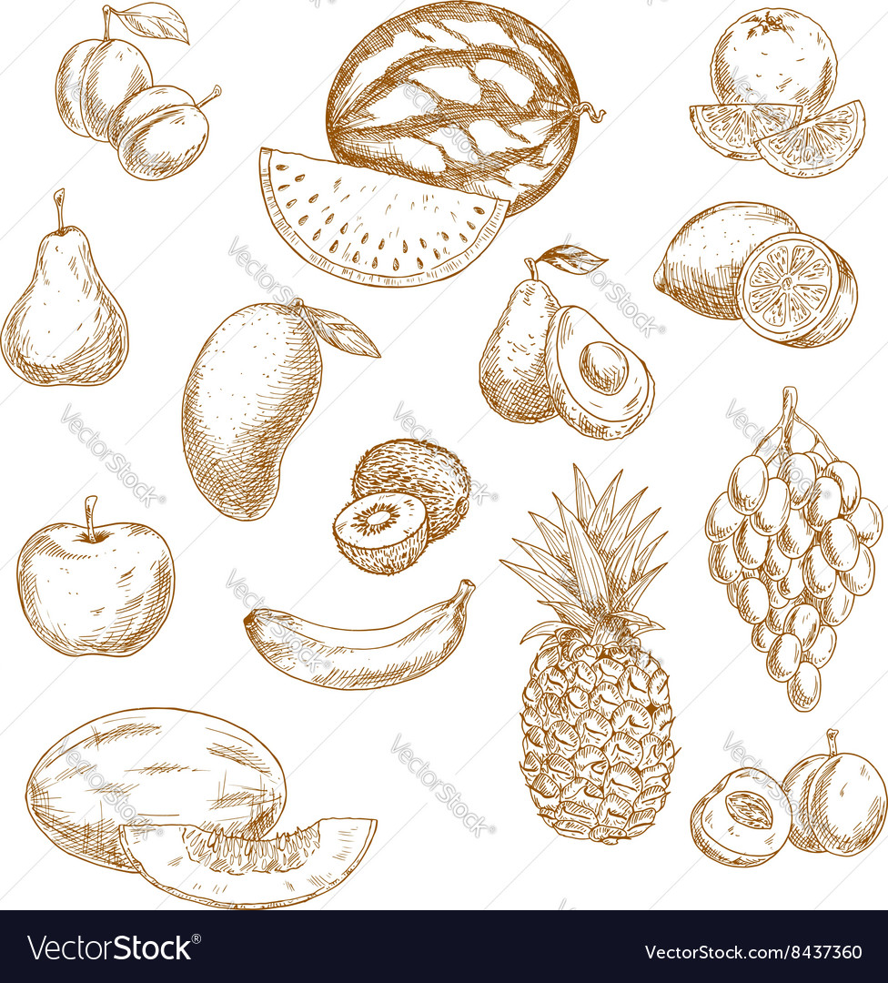 Whole and halved fresh fruits vintage sketch icons vector