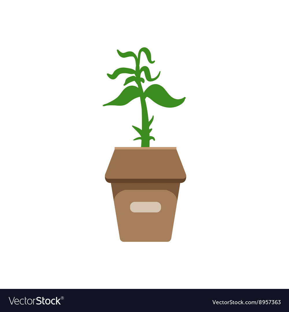 Sprout in a box vector