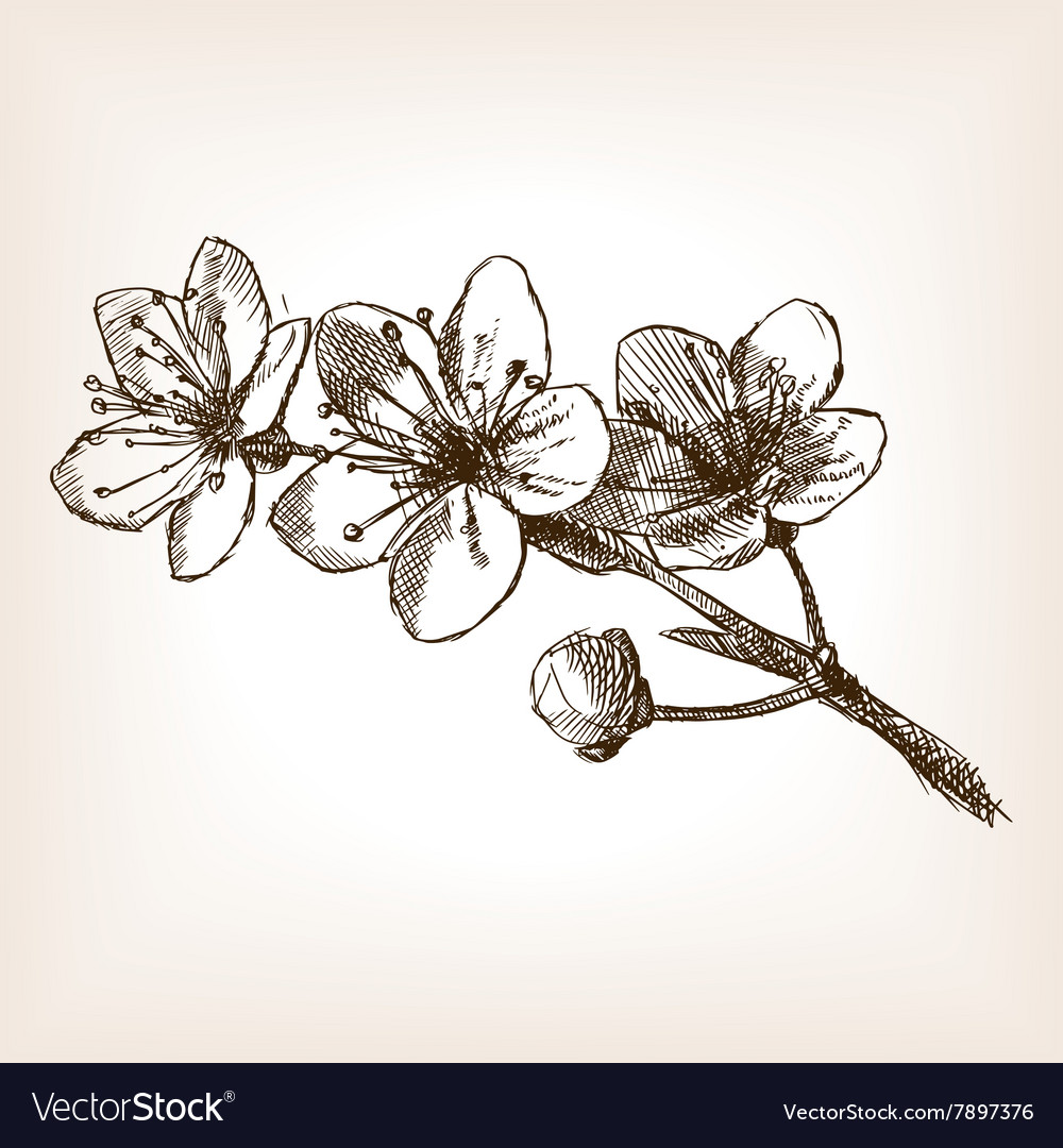 Cherry blossom hand drawn sketch vector