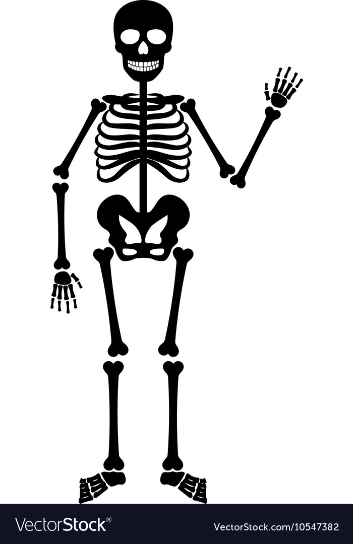Halloween black skeleton vector