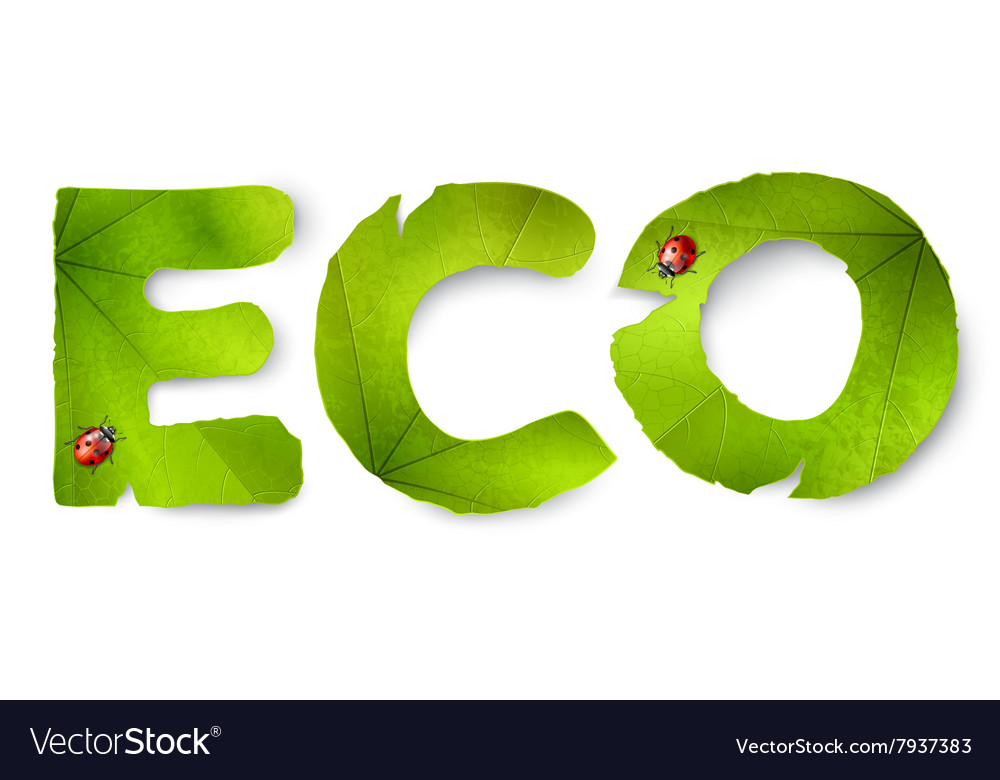 Eco word made from green leaves vector