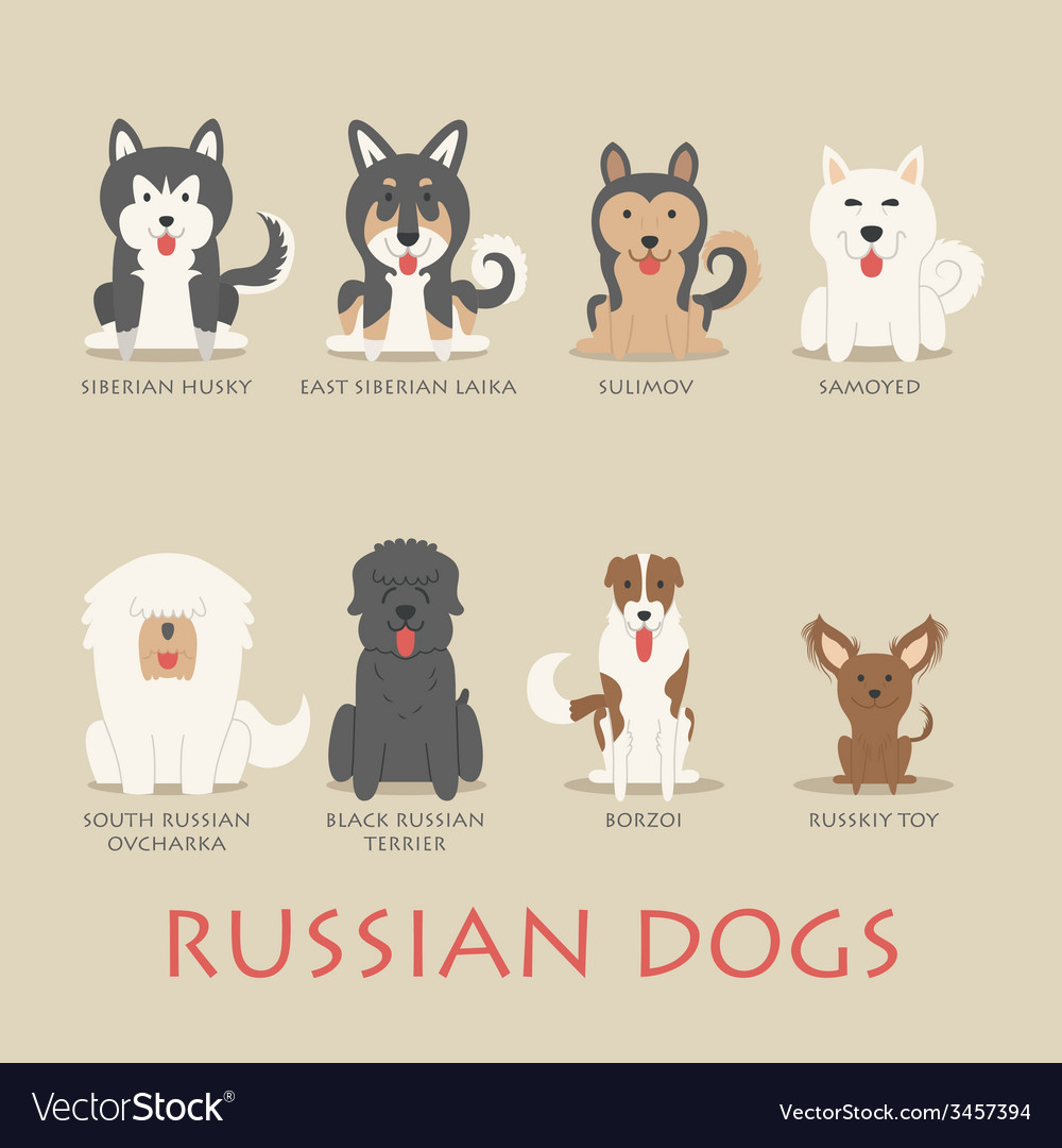 Set of russian dogs vector