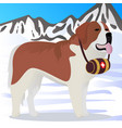 st bernard dog lifesaver in mountains vector image