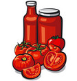 tomatoes and tomato sauce vector image