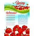 spring time flowers holiday greeting poster vector image