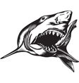 Big Shark vector image