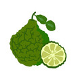 bergamot with slice flat design bergamot isolated vector image