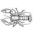lobster top view vector image