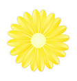 yellow flower on white background vector image