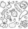 doodle of vegetable style collection vector image