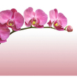 Orchid flower background vector image vector image