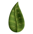 leaf with water droplets isolated icon design vector image