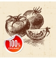 Hand drawn sketch vegetable tomato Eco food vector image vector image