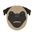 isolated pug avatar vector image