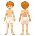Boy body parts vector image