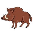 Boar isolated on white vector image