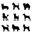 Dogs silhouettes vector image