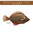 Flounder Marine Food Fish vector image